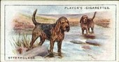 Dogs Scenic backgrounds 1924