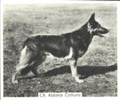 Champion Dogs 1st Series 1938