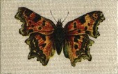 Butterflies and Moths (Paper backed Silks) 1925