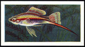 Aquarium Fish 1st Series 1957