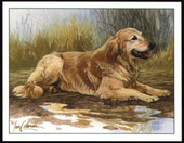 Dogs Golden Retrievers 1999