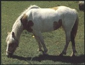 Horse Breeds 1990