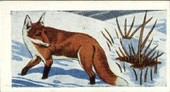 Animals of the Countryside 1959
