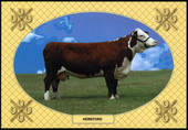 Cattle Breeds 2007