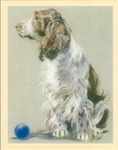 Dogs The English Springer Spaniel 2001
