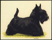 Dogs Scottish Terriers 1999