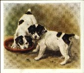 Our Puppies 1936