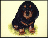 Dogs Dachshunds 1999