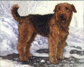 Dogs Airedale Terriers 1999