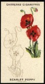 Wild Flower Art Series 1923