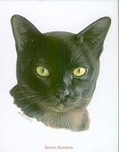 Breeds of Cats 2000