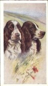 Our Dogs 1939