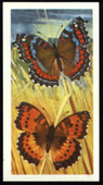 Butterflies of the World 1966 Ref SR7 red back