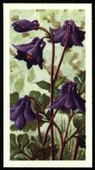Wild Flowers Series 2 blue back with Issued by 1959