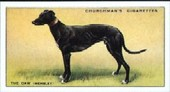 Racing Greyhounds 1934 reprint 1989
