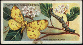 Butterflies and Moths 1904