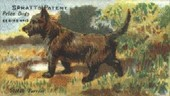 Prize Dogs c1910 (reprint 2001)
