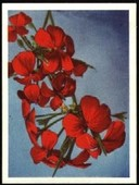 Our South African Flora (Without firms name) 1940