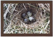 Nests and Eggs of British Birds 3rd Series 2006