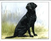 Dogs Labrador Retrievers 1999