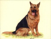 Dogs German Shepherds 1999