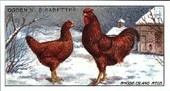 Poultry 1st Series 1915 (reprint 1998)