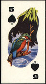 Natural History Playing Card Inset 1961