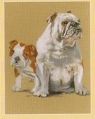Dogs The Bulldog 2005