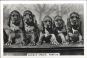 Dogs 1939