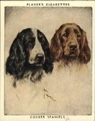 Dogs Pairs and Groups 1955