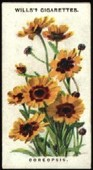 Old English Garden Flowers 1st Series 1911