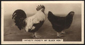 Real Photographs 6th Series Comic Animal Pictures 1933