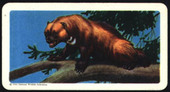 Animals of North America (Roland back 47mm printing) 1960 Ref CU2