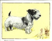 Dogs captions in block letters 1934