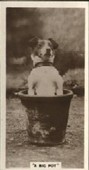 Real Photographs 3rd Series Comic Animal Pictures 1932