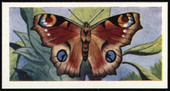 Butterflies & Moths 1957