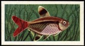 Aquarium Fish 2nd Series 1957