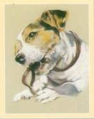 Dogs The Jack Russell 2001
