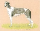 Dogs Greyhounds 2000