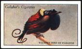 Zoo Tropical Birds 1st Series 1928