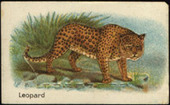 Animals of The World 2nd Series (uncut card) 1925