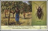 F1667 Harmful Agricultural Insects of the Congo 1957