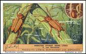 F1374 Water Insects 1938