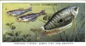 Pond and Aquarium 1st Series unissued c1950