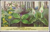 F1565 Forest Flowers 1953
