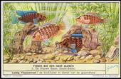 F1593 Fish and their Habitat 1954