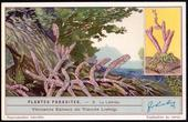 F1264 Parasitic Plants 1932