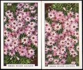 Garden Flowers The error and corrected cards of number 22 1938